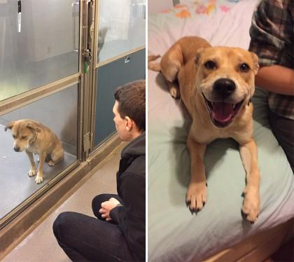 15 φωτογραφίες αδέσποτων ζώων πριν και μετά την υιοθεσία τους