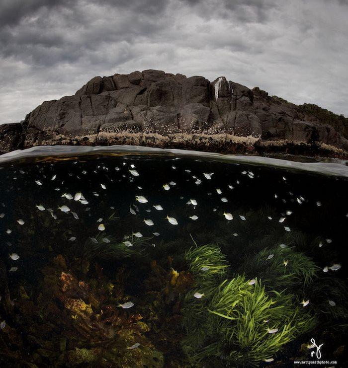 ψάρια φωτογράφος θάλασσα